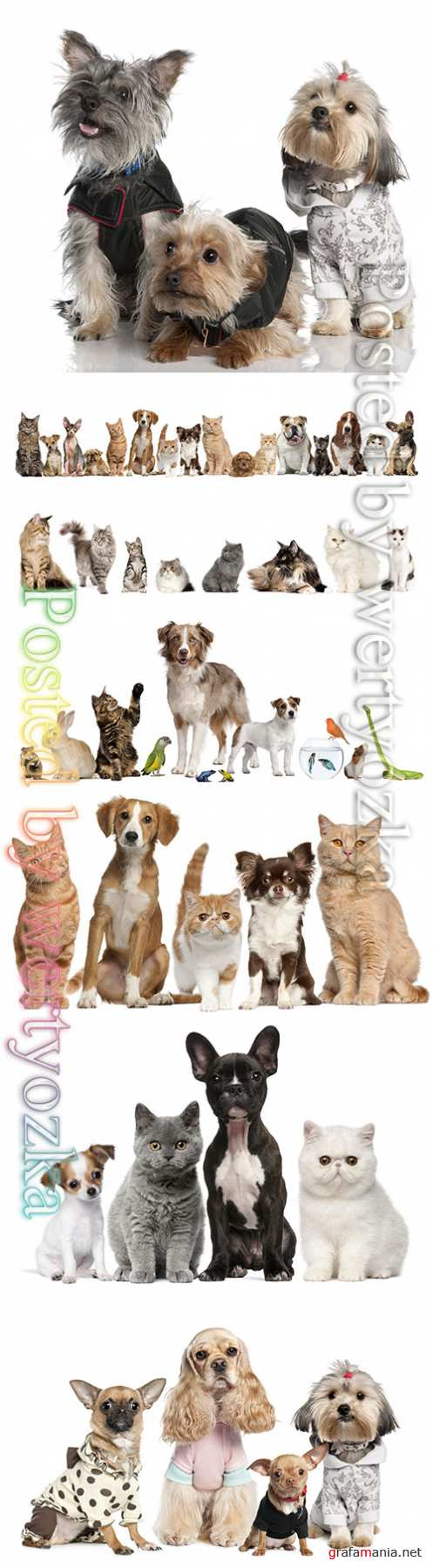 Cats and dogs beautiful stock photo