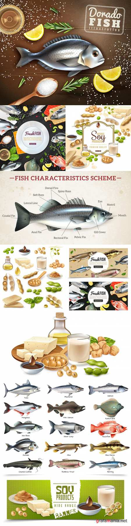 Fresh fish and soy products realistic illustrations