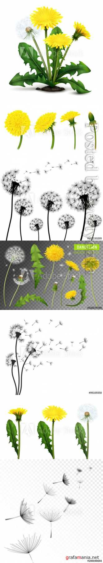 Dandelions vector illustrations