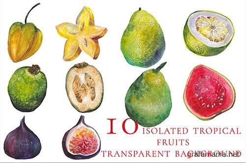 10 isolated watercolor tropical fruits 2
