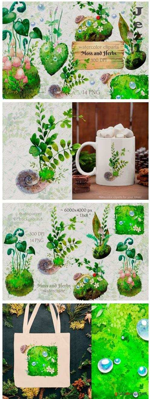 Watercolor cliparts of forest moss and herbs, PNG - 1432969