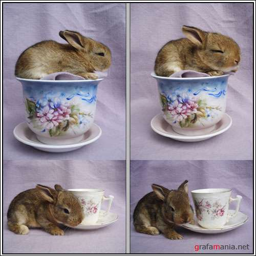 Фотоклипарт - Bunnies in a Tea Cup Pack