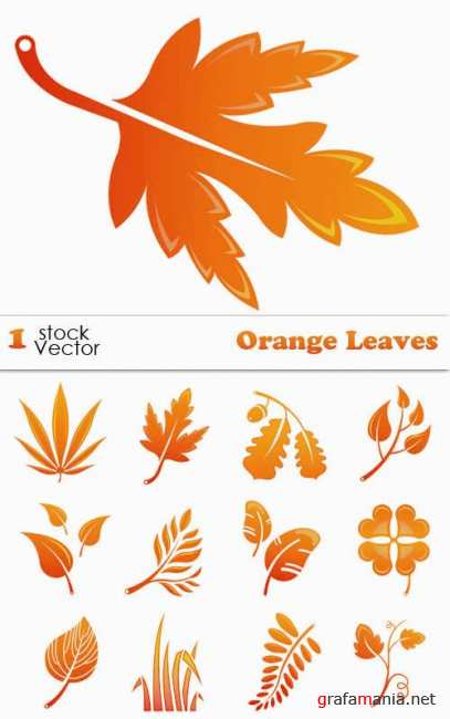 Stock Vector - Orange Leaves