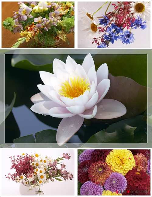 Wallpapers - 80 Amazing Flowers Pack