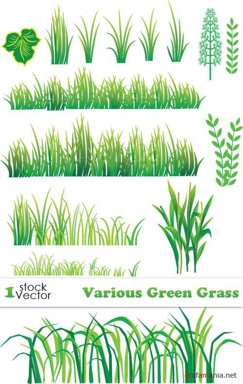 Various Green Grass Vector