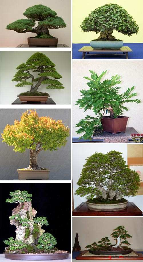 Art of Bonsai and Penjing p.5