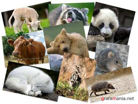 50 Beautiful Animals HD Wallpapers Set 72