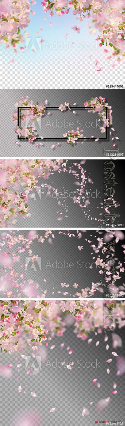 Spring cherry vector blossom